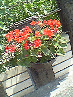 image/mimitakosu-2006-07-15T13:13:59-2.jpg
