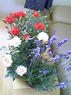 image/mimitakosu-2006-05-21T01:30:00-1.jpg