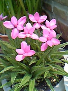 image/mimitakosu-2006-06-03T10:29:15-1.jpg