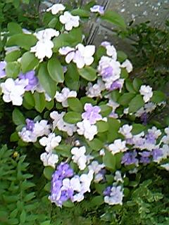 image/mimitakosu-2006-06-12T00:46:19-1.jpg