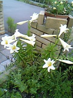 image/mimitakosu-2006-06-15T16:59:25-2.jpg