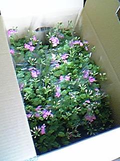 image/mimitakosu-2006-06-17T13:24:27-1.jpg
